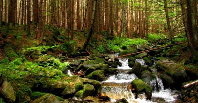 Україна і її мальовничі ліси
