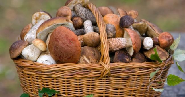 Грибная пора, или 16 грибных блюд на любой вкус>